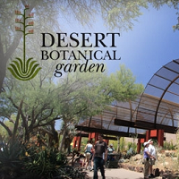 Desert Botanical Garden Sightseeing in AZ