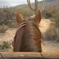 pantano riding stables horseback riding in az