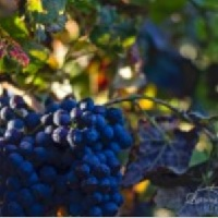 lightning-ridge-cellars-wineries-in-az