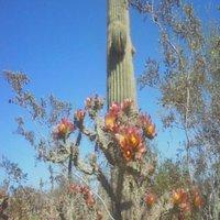 yuma-conservation-garden-AZ