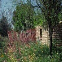 tucson-botanical-garden-az