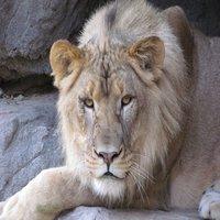 tucson-zoo-az